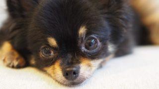 犬に「待て」を教えるときの理性