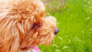 犬の排せつ物がトイレからはみ出す問題を改善する方法