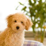 人間が喧嘩をする時、犬が震えるのはどうして?