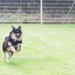 風船を使って犬に吠えることを止めさせる方法