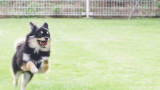 犬が吠えるようになった理由と対処法