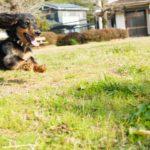 犬が飛びつく理由