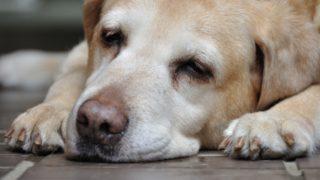 犬が嘔吐して落ち着きがない時はどうすればいい?