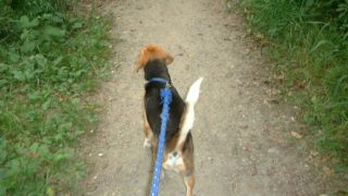 犬の喧嘩を仲裁する方法