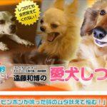 TVチャンピオン2回優勝者!遠藤和博の犬のしつけ講座【検証とレビュー】特典付き