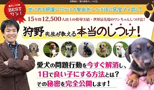 ワンちゃんの問題行動が1日で解消!狩野誠の「愛の家庭犬しつけ法」