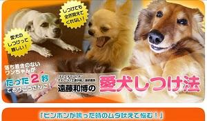 TVチャンピオン2回優勝者!遠藤和博の犬のしつけ講座