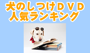 犬のしつけDVD教材人気ランキング